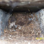 Oklahoma Wildlife Control Soffit Eve Void Squirrel Den Nest Attic