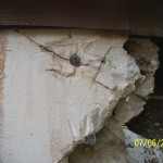 Squirrel Damage Chewing Fascia Soffit Attic Oklahoma Wildlife Control Animal Removal Exclude Evict Proofing Rodent Tulsa