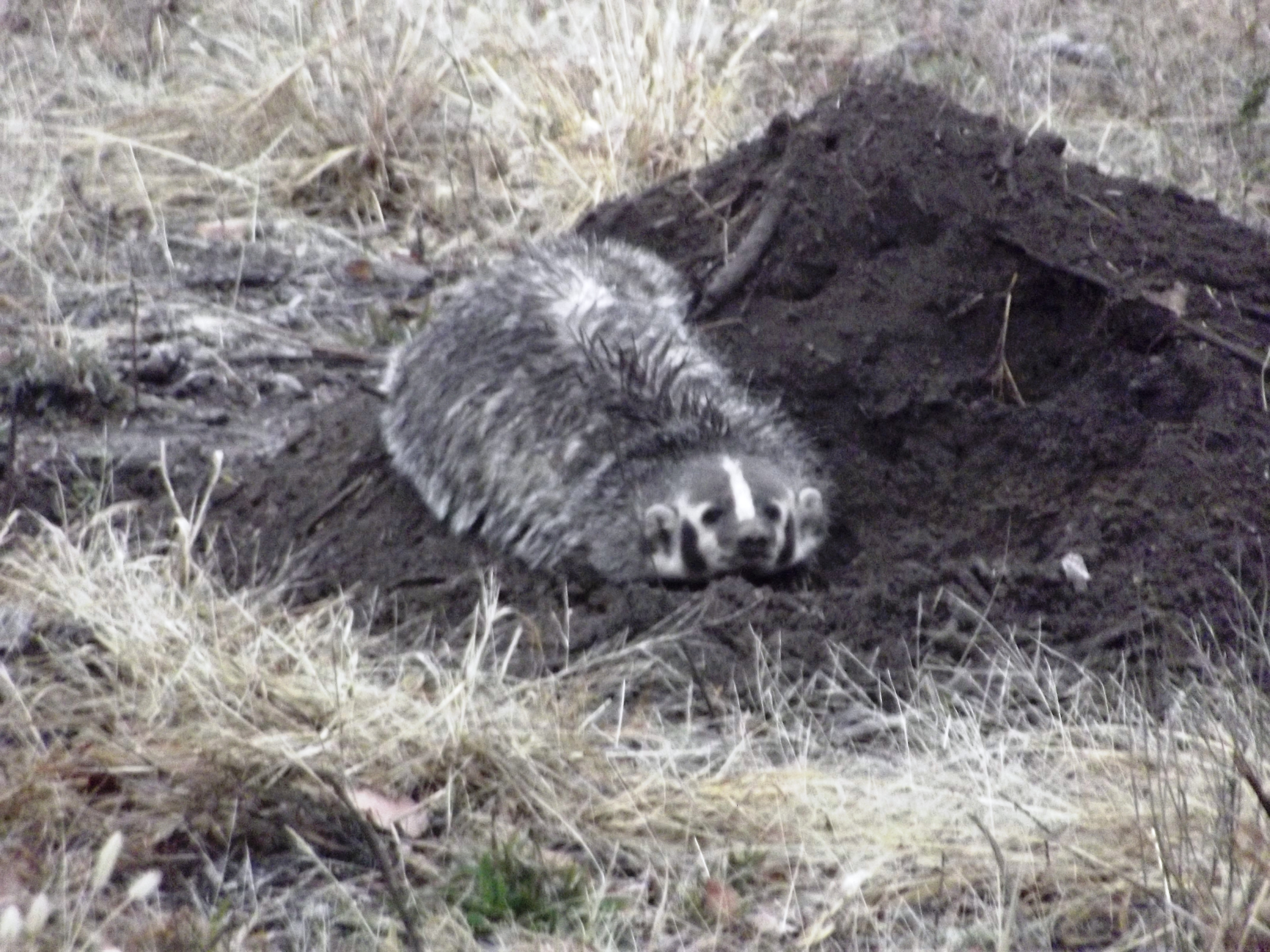 Badger Toll Free 1 855 787 9453 Or 918 367 9060
